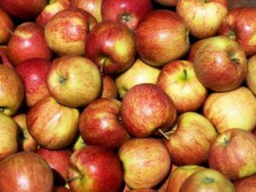 braeburn-apples-300x210