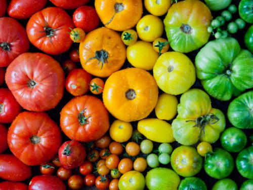 tomatoes-mixed-heritage